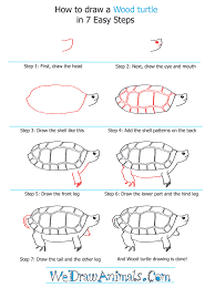 Small Picture How to Draw a Wood Turtle
