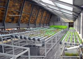 City farming di atas hotel greenhost