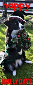 1000 ideas about Doggy Position on Pinterest Puppy care Dog.