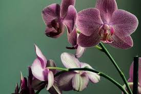Kwiaty doniczkowe domowe: zielone, cieniolubne, duże. Zdjęcia i nazwy!