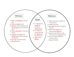 Venn Diagram Comparing Meiosis And Mitosis Mitosis Meiosis Both