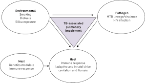 Pathophysiology Of Tuberculosis In Flow Chart Tuberculosis And Lung Damage From Epidemiology To