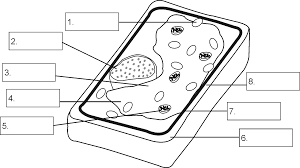Plant Cell Coloring In Addition Free Printable Plant Parts ...