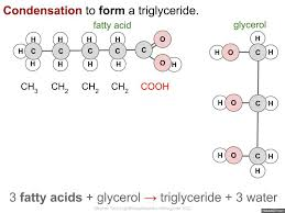 3.2 Carbohydrates, Lipids and Proteins | i-Biology