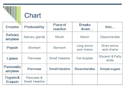 Disclosed Carbohydrates Lipids Proteins Nucleic Acids Chart