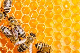 organic honey的圖片搜尋結果