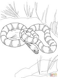 Small Picture Coloring Pages Realistic Snakes Coloring Pages Free Coloring