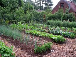 mulch-for-vegetable-garden-idea