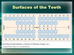 Periodontal Charting Symbols Hard Tissue Charting