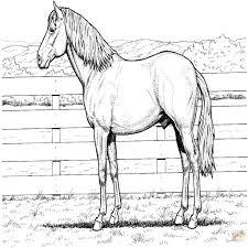 Disegno Di Cavalli Che Saltano Un Ostacolo Da Colorare Disegni Da