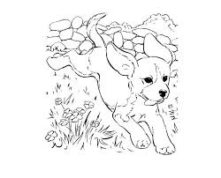 realistic puppy coloring pages.  Realistic Full Size Of Cute Cartoon Puppy Coloring Pages For Adults To Print Free  Realistic Biscuit Page In L