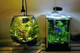 beta fish tanks betta tank decorations lrge brndy diy spectacular