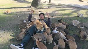 Image result for overrun with rabbits