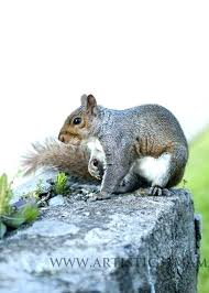 best squirrel repellent natural uk way to keep chipmunks out of garden how get rid eating