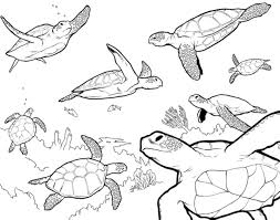 Awesome Sea Animal Coloring Pages Printable Free Gallery