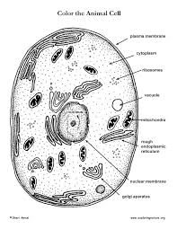 Small Picture Animal Cell Coloring Page