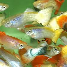 Fish Compatibility Charts Freshwater Marine Charts