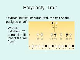 Polydactyly Pedigree Chart Example Of Trait Albinism Ppt Video Online Download