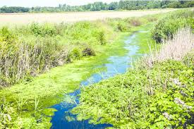 drainage ditch algal bloom in an agricultural drainage ditch phosphorus is a key