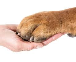 ten easy steps to dremeling your dogs nails