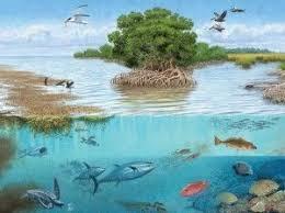 Виды экосистем типы антропогенные естественные составляющие Виды экосистем