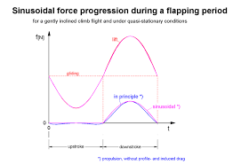 only the reference line such as in gliding flight and the amplitude of the sine half wave in the middle of