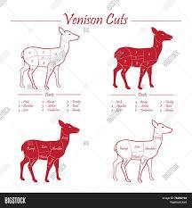 Venison Meat Cut Vector Photo Free Trial Bigstock