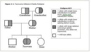 Solved The Predominant Inheritance Pattern For ß Thalasse