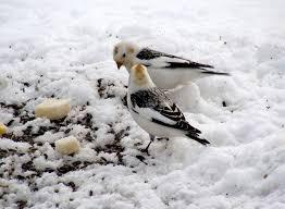 L'histoire de Dieu me voit et les petits oiseaux