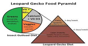 Leopard Gecko Age Chart 76 Scientific Feeder Insect Nutrition Chart