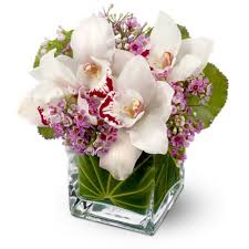 teleflora s lovely orchids