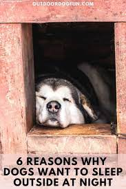 At 0 degrees celsius (32°f) is where it starts being unsafe. 6 Reasons Why Dogs Want To Sleep Outside At Night Sleeping Dogs Every Dog Breed Dog Care