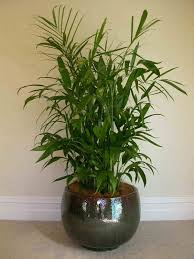 feng shui plants for office. Stupendous Cool Office Modern Beautiful Indoor Plants Desk Plants: Full Size Feng Shui For I