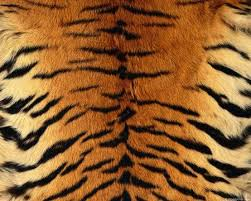 Animal Patterns Awesome Animal Patterns Textures Abstract Background Wallpapers On
