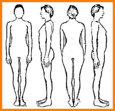 Human Body Outline Drawing Free Download Best Human Body