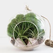 12 photos gallery of air plant terrarium inspirational ideas
