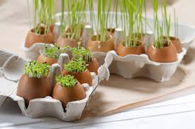 how to grow your own herbs on your kitchen counter it s easier said than done to ensure our families have access to fresh veggies every day
