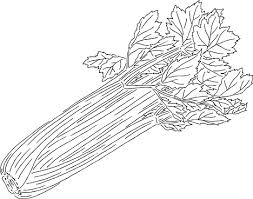 celery clipart black and white. Inside Celery Clipart Black And White