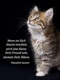 über Die Freundschaft Einer Katze Cat Katzen Katzen Zitate