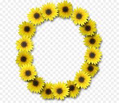 caso de la letra del alfabeto ún de girasol flor