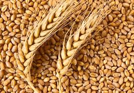 Russian wheat prices set to surge as sellers eye steepening carry