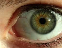 Different Shades Of Blue Eyes Chart Eye Color Guide The Most Common Eye Colors