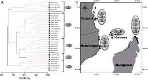 Linkage between fish functional groups and coral reef benthic ...