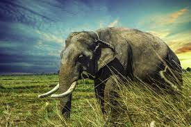 Thailand Elephant Wallpapers - Top Free ...