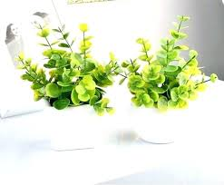small office plant. Small Desk Plants Office Plant For Formidable . Like Follow E