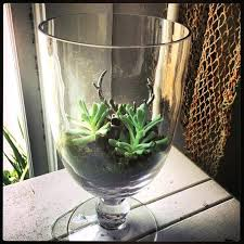 large glass vases uk clear vase idea for coffee table top put some succulents or large glass vases uk clear