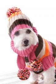 Bildergebnis für Hund und Stricknadel