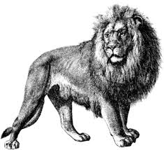 detailed lion drawings in pencil. Delighful Drawings Intended Detailed Lion Drawings In Pencil