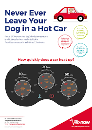 Dogs In Hot Cars Check Out Our Dog In Car Temperature Chart