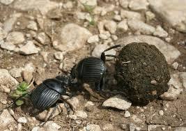 скарабей священный жук египта жук скарабей талисман из египта